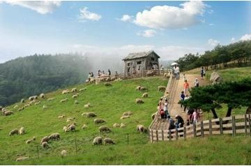 Nông nghiệp - Trang trại